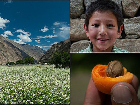 In Turtuk, only smiles are sweeter than apricots | Australia Hotels and Resorts | Scoop.it