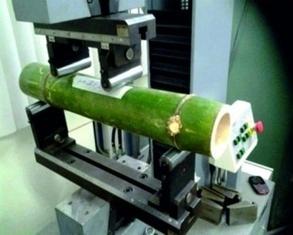 Venezuelan University Developing Experimental Bamboo for Green Homes - Venezuelanalysis.com | BioArchitecture | Scoop.it