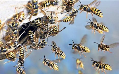 There's less of a buzz in our gardens this summer - Telegraph | BIOSCIENCE NEWS | Scoop.it