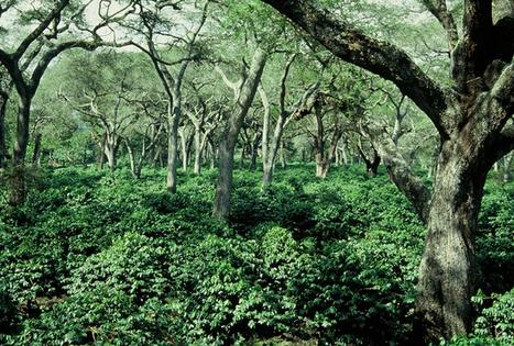 L'agroforesterie, ou l'art de mettre des arbres dans les champs (1) | ECOLOGIE BIODIVERSITE PAYSAGE | Scoop.it