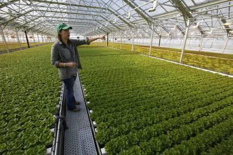 Farming Gets High Tech in Bid to Offer Locally Grown Produce | A. Perry Design Lounge | Scoop.it