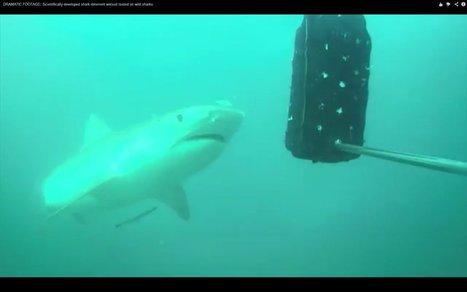 Des combinaisons pour faire fuir les requins   694028   Scoop.it