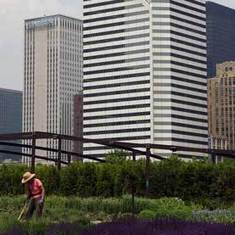 Using Satellites, Researchers Pinpoint Chicago's Urban Gardens: Scientific American | Research from the NC Agricultural Research Service | Scoop.it