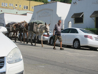 Three Mules in Los Angeles | Root Simple | Awesome Vids | Scoop.it