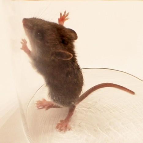 Alternative pour tester le botox : jusqu'à 500 000 souris sauvées   Vegactu - végétarien, végétalien et végan   Scoop.it
