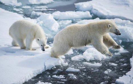 L'Arctique libre de glace pour la 1ere fois en 100.000 ans | Chronique d'un pays où il ne se passe rien... ou presque ! | Scoop.it