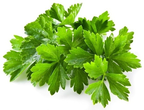 Cilantro Hailed for its Water Purification Properties | Organic Farming | Scoop.it