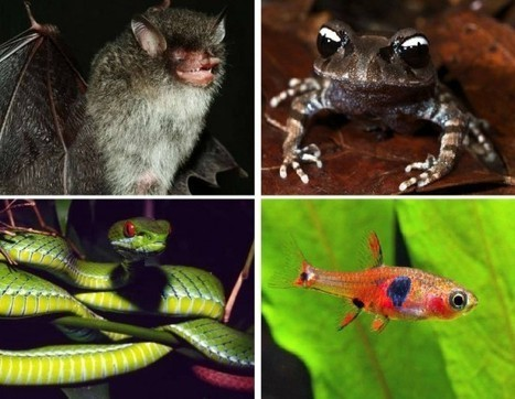 9 incríveis animais recém-descobertos e já ameaçados  –   Planeta Sustentável | Meio ambiente | Scoop.it