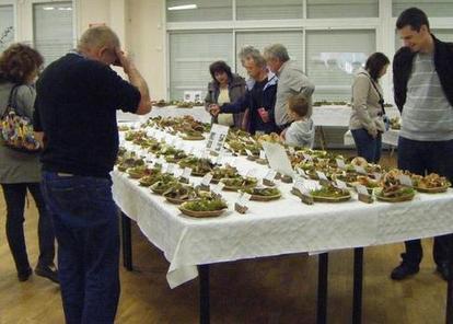 Nouan-le-Fuzelier (41) > Des champignons sous toutes les coutures | Autour de Nouan-le-Fuzelier | Scoop.it