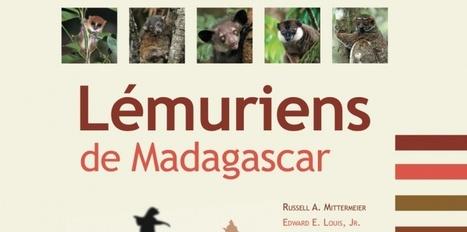 Tout ce que vous vouliez savoir sur le lémurien sans oser le demander | Ecology view | Scoop.it