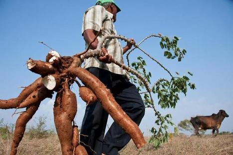 Colombie: le retour des paysans spoliés, la peur au ventre | Questions de développement ... | Scoop.it