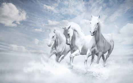 white horses | Hq Wallpapers Fun | hd-wallpaper-fun | Scoop.it