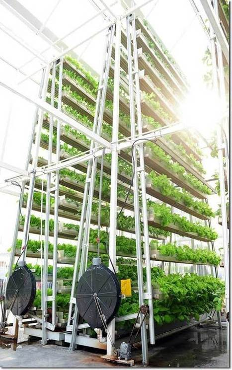Vertical Farming: Singapore's Solution to Feed the Local Urban ... | Benhil - Rooftop garden | Scoop.it