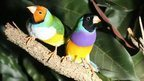 Finches' colour shows personality | Mind Candy  { interdimensionally } Cubed... It's SO yesterday to be a Square | Scoop.it