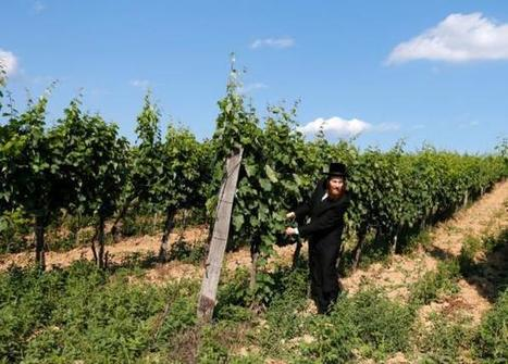 Hungary's Tokaj wine region revives Jewish heritage | Vitabella Wine Daily Gossip | Scoop.it