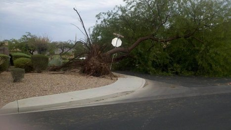 Storm Damages Trees in Las Vegas | Tree Care Services | Scoop.it