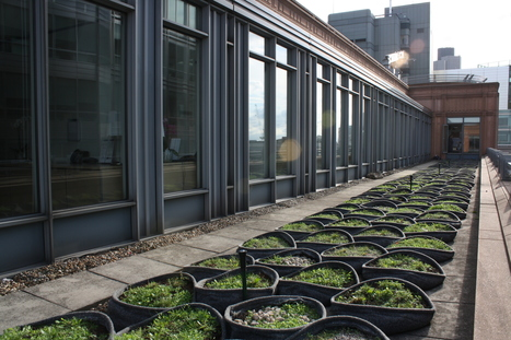 Green roofs could grow energy savings for London firms | Toits verts et actualités | Scoop.it