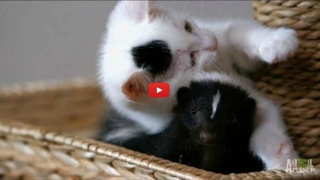 Who Knew Kittens and Skunks Made Such Good Friends?   Abgefahrene Tiere   Scoop.it