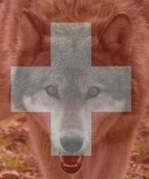 Suisse : un guide pratique de la protection des troupeaux | FERUS | Loup | Scoop.it