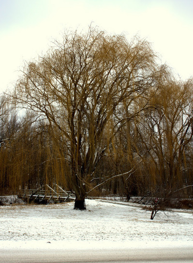 From the Soil: Views of Morton Arboretum in Winter | Annie Haven | Haven Brand | Scoop.it