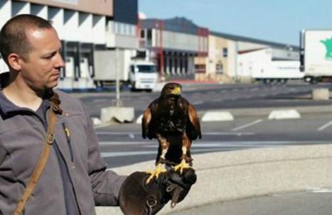 Fauconnier, client mystère...Top 10 des métiers insolites en Seine-Maritime | Les métiers du futur | Scoop.it