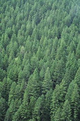 Timbervest Denies SEC Allegations | Timberland Investment | Scoop.it