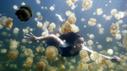 Movie review: The Last Reef 3D | canada.com | Underwater 3D Film | Scoop.it