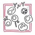 Immunology | Armando Hasudungan | ImmunoUPS | Scoop.it