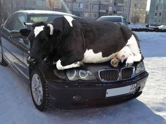 Reminder: As days get colder animals are attracted to the warmth of cars... | Tennis | Scoop.it