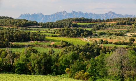 La biodiversidad y la humanidad del vino - Voces Económicas   Essência Líquida   Scoop.it