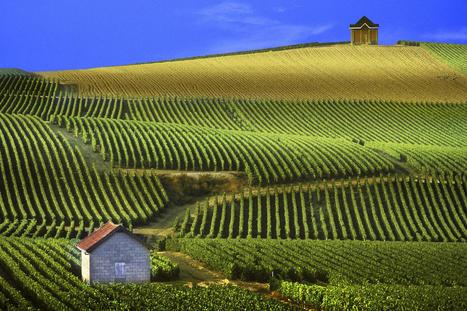 S'offrir un bien immobilier à Reims, la capitale du champagne | Actualités immobilières en France | Scoop.it
