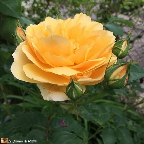 Dans mon jardin en mai malgré une météo capricieuse - Le JardinOscope, toute la flore et la faune de nos parcs et jardins   Les colocs du jardin   Scoop.it