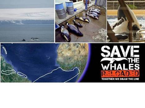 World Cetacean Alliance   World Cetacean Alliance.   Environment.   Scoop.it