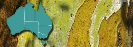 Australian Health Map - Health & Wellbeing   Boletin Epiticlogico   Scoop.it