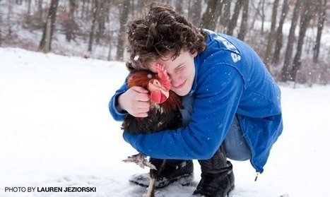 Chickens and Autism: How 'Goldie' Helps a Michigan Teen | Animals R Us | Scoop.it