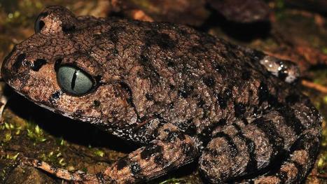 Singe qui éternue sous la pluie, poisson qui marche : 200 nouvelles espèces découvertes dans l'Himalaya   Chronique d'un pays où il ne se passe rien... ou presque !   Scoop.it