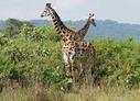 RDC: l'ICCN va cogérer le parc de Kundelungu avec les communautés locales | CONGOPOSITIF | Scoop.it