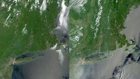 Des chenilles sont en train de grignoter des forêts américaines et on peut même le voir depuis l'espace | EntomoNews | Scoop.it