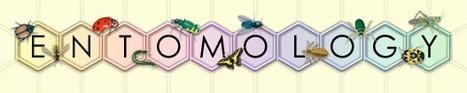 (EN) - Entomology Glossary | usyd.edu.au | Glossarissimo! | Scoop.it