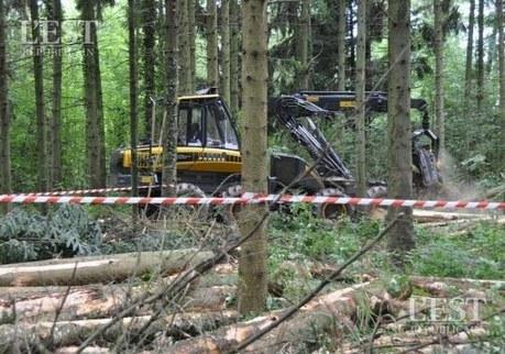 Lorraine : la ressource forestière est en surchauffe | Approvisionnement et Première Transformation | Scoop.it