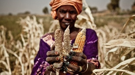 Extreme weather, extreme prices – what will more erratic weather do to food prices? | Oxfam GB | Policy & Practice | UCOS - Klimaatverandering | Scoop.it