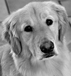 Feeding Fido Raw Pet Food a Risky Choice: FDA   In Your Pet's Best Interest   Scoop.it