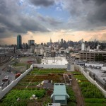 Top 5 Of The Greatest Urban Rooftop Farms — The Pop-Up City | The Barley Mow | Scoop.it