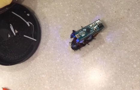 DIY Arduino Hack Lets You Command A Creepy Living Cyborg Cockroach | Raspberry Pi | Scoop.it