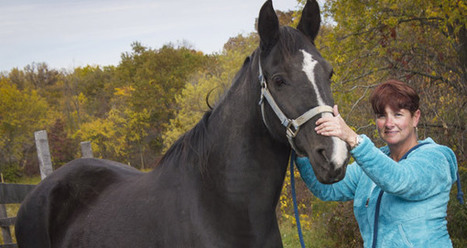 Counseling with horses that heal | UWM News | MSMU MFT's - What's Happening | Scoop.it