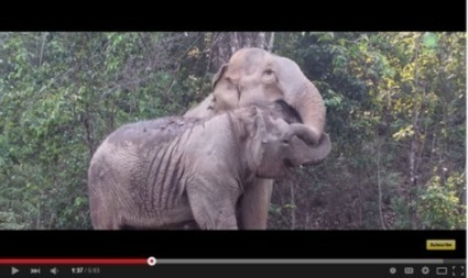 Weekly Heart Opener- Elephant Mother and Child Reunite | Eileen Anglin | Compassion in Action | Scoop.it