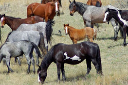 Horse Domestication Happened Across Eurasia, Study Shows | World Neolithic | Scoop.it