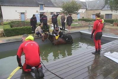Insolite: le cheval tombe dans… la piscine [vidéo] | ouest-france.fr | Cheval | Scoop.it