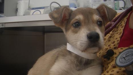 NY man charged with abandoning puppies   Northern Puppies Saga   Scoop.it