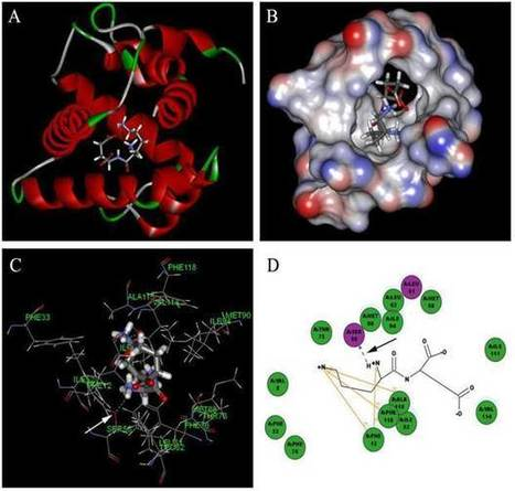 Ligands Binding and Molecular Simulation: the Potential Investigation of a Biosensor Based on an Insect Odorant Binding Protein | Odorant Binding Proteins | Scoop.it